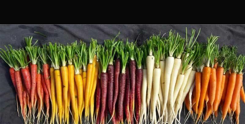 Cuando las zanahorias eran un arco iris